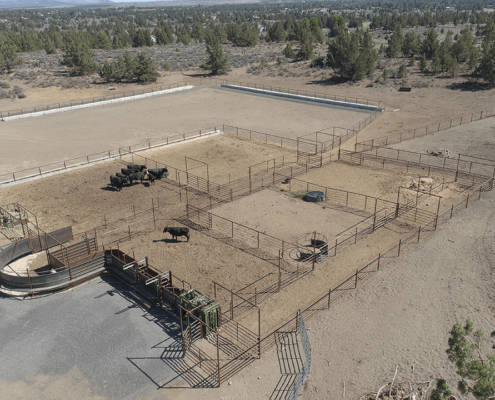 Cattle facility fencing